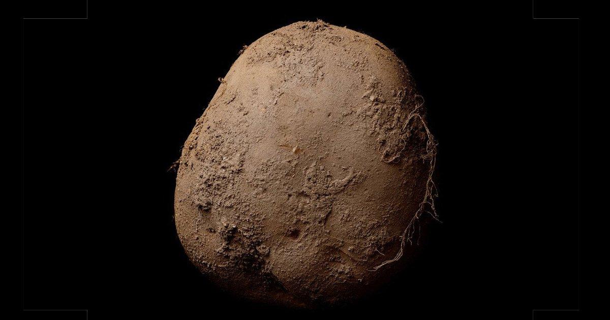6 59.jpg?resize=1200,630 - 유기농 감자 사진 한 장, '13억'에 판매된 이유.jpg