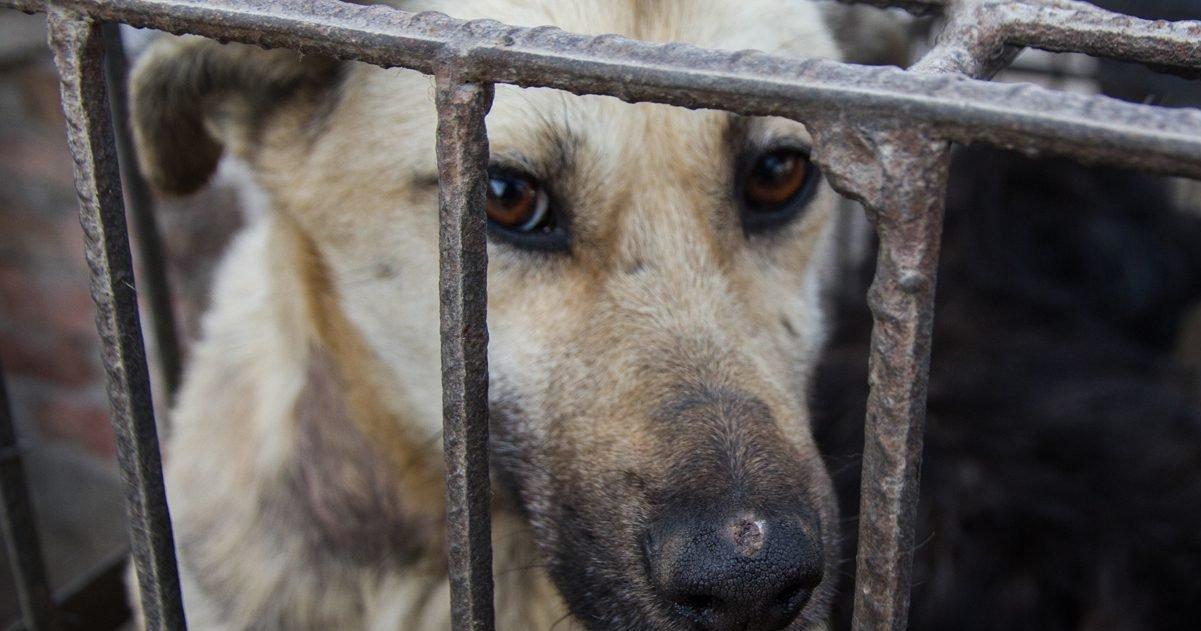 animal equality e1592830856737.jpg?resize=1200,630 - Chine : Le festival de la viande de chien débute