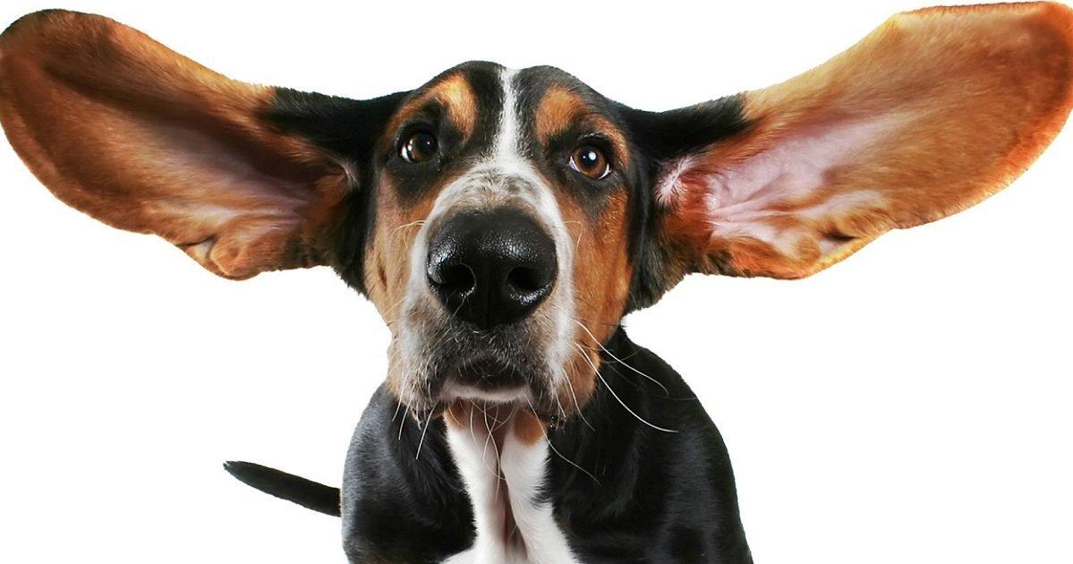 art deco stickers e1593454543697.jpg?resize=412,232 - 10 Photos de chiens qui mettent de bonne humeur