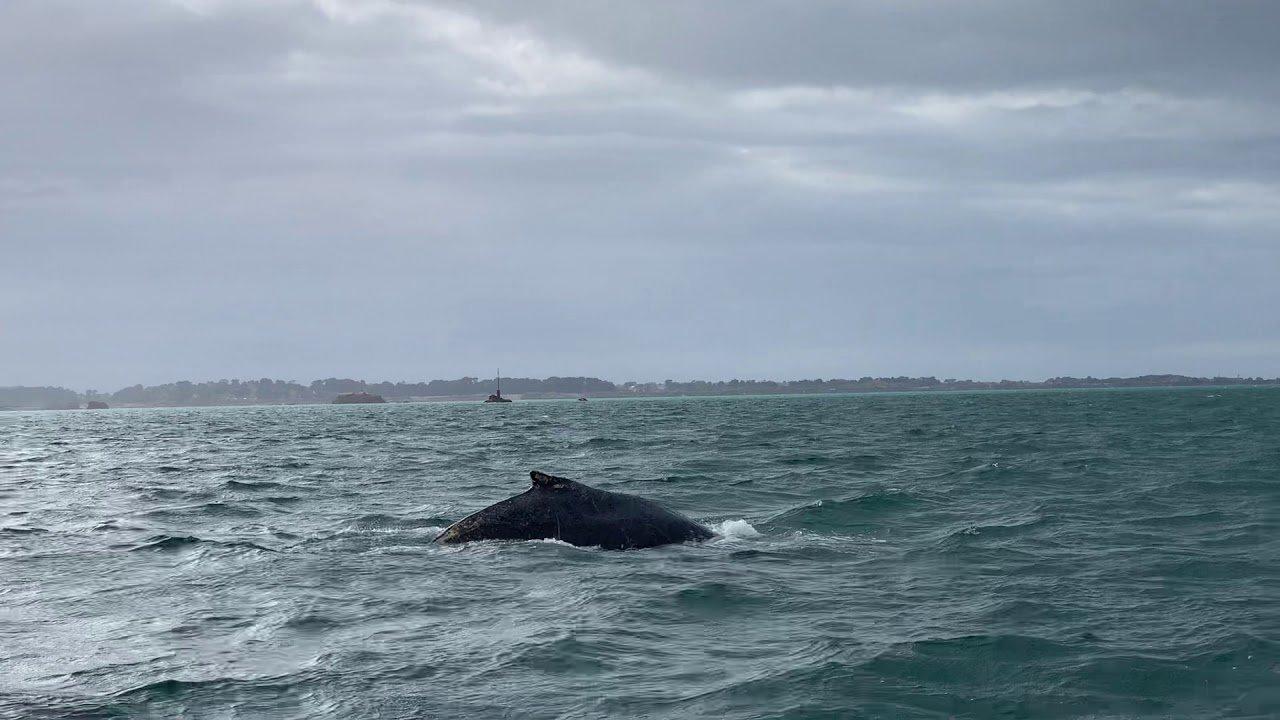 baleine.jpg?resize=412,232 - Nature: une baleine a été aperçue ce week-end au large de Paimpol