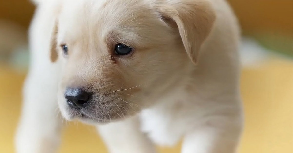 chien.jpg?resize=412,232 - Saône-et-Loire: il tue la chienne de sa fille puis la jette par la fenêtre