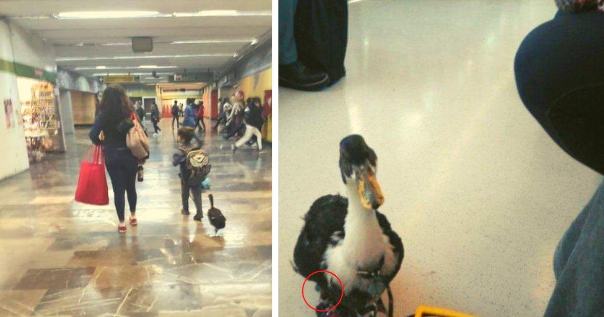 diseno sin titulo 121.png?resize=1200,630 - Pasajeros Quedan Impresionados Tras Ver A Un Pato Con Zapatos Junto A Un Pequeño En El Metro
