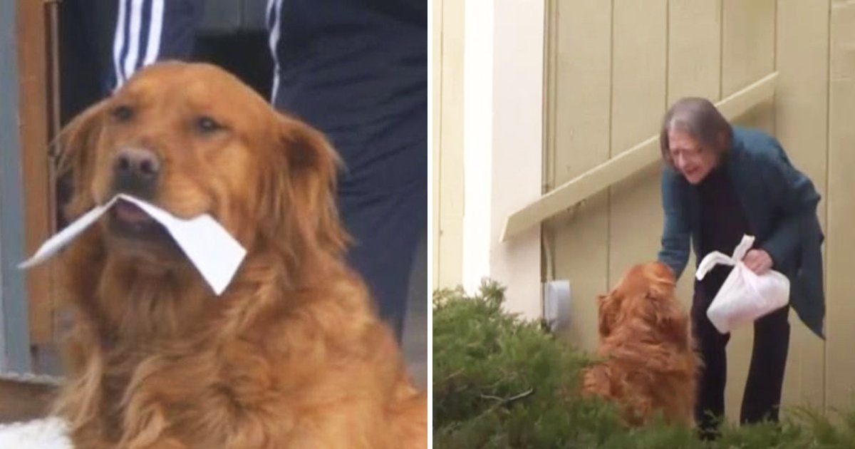 dog delivers groceries.jpg?resize=412,232 - Miracle Dog Delivers Groceries To Sick Quarantined Neighbor