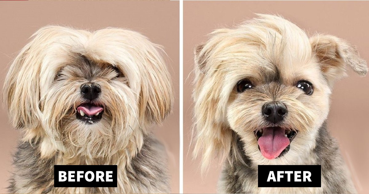 dog grooming.jpg?resize=1200,630 - Before And After Dog Grooming Pictures That Will Make Your Day