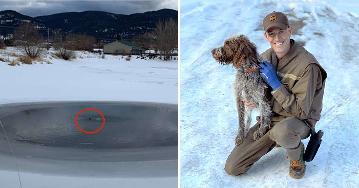 dog saver.jpg?resize=1200,630 - Dog Saver Strips Down To Underwear, Risks Life To Save A Trapped Dog