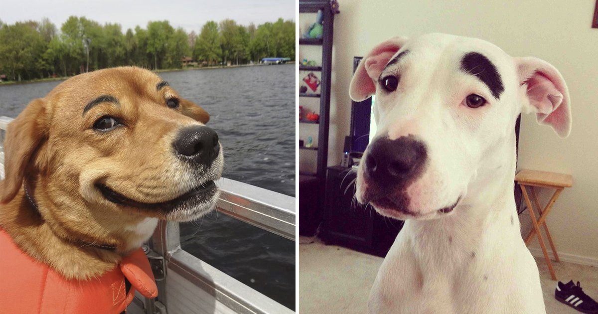 dogs with eyebrows.jpg?resize=412,232 - 20 Dogs With Eyebrows Pictures That Are Weirdly Fascinating