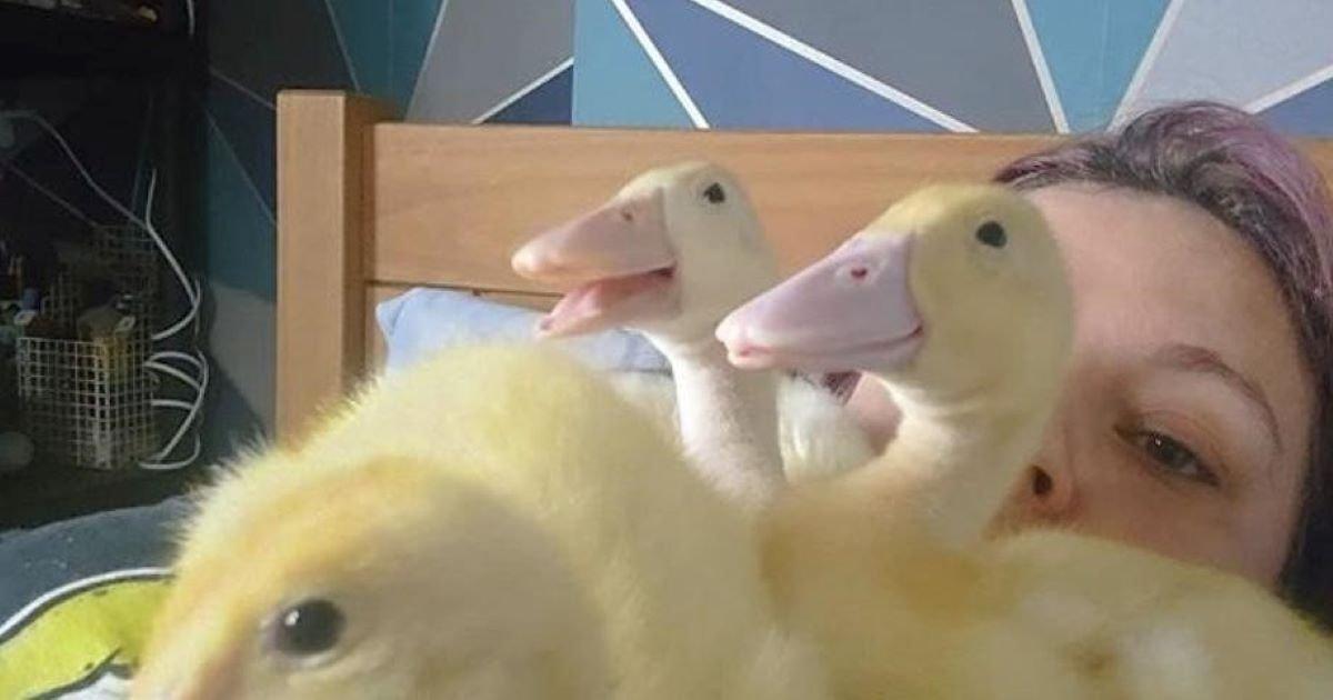 ec8db8eb84ac 4 16.jpg?resize=412,275 - Ducks Born Out Of Supermarket Eggs In UK