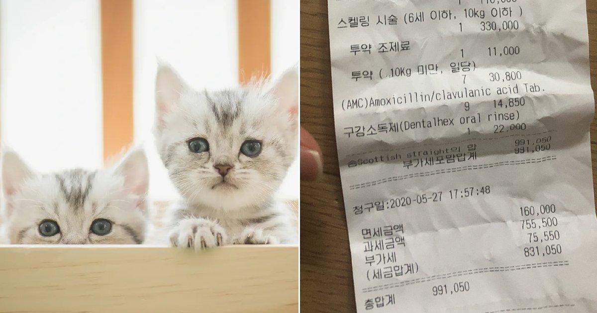 "eca09cebaaa9 ec9786ec9d8c 30.png?resize=412,232 - ""동물병원에서 고양이 스케일링 치료비가 '99만원' 청구됐습니다"""