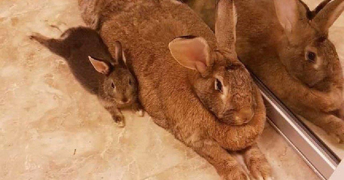 fgsdgsg 1.jpg?resize=1200,630 - Tiny Rabbit's Love Story With Giant Girlfriend Proves Love Is Blind
