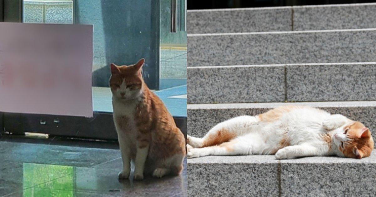 ijiiji.png?resize=1200,630 - 新型コロナウイルスの感染拡大の影響で普段の「定位置」を出禁扱いされてしまった猫の表情がじわじわくる件