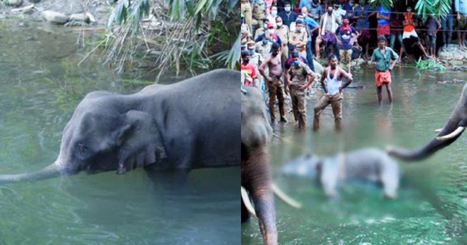 "kakaotalk image 2020 06 19 03 37 48.jpeg?resize=1200,630 - ""아가야… 엄마가 미안해""… 전 세계를 눈물바다로 만든 '물 위에 선 채로 죽은 코끼리'(+영상)"