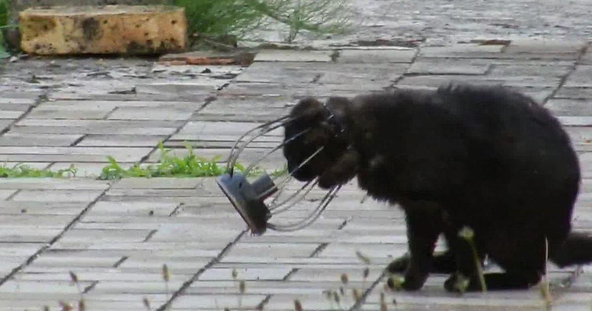 le parisien 8 e1593264988804.jpg?resize=1200,630 - Un chat a été secouru après avoir passé 2 mois la tête coincée dans une lampe