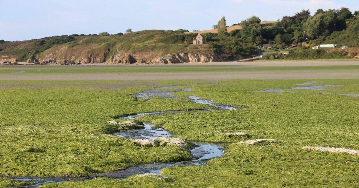 maxnewsworldfour317372 3159267 e1591820389472.jpg?resize=1200,630 - Cette année encore, les algues vertes sont de retour en Bretagne