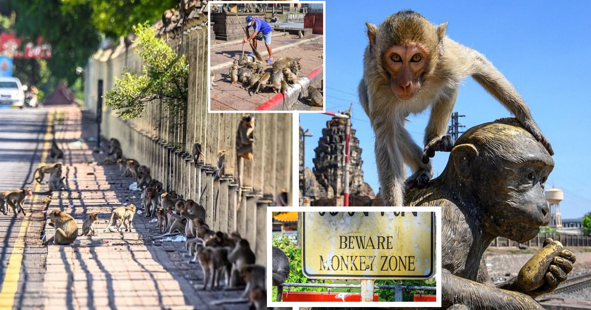 monkeys6.png?resize=1200,630 - Humans Fight To Reclaim City From Monkeys Ruling The Streets And Attacking People