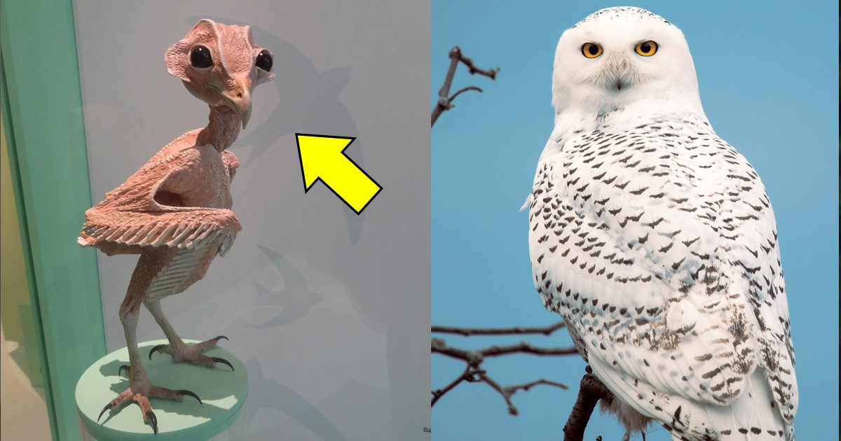 owl without feathers.jpg?resize=412,232 - Why This 'Naked' Owl Without Feathers Is Breaking The Internet