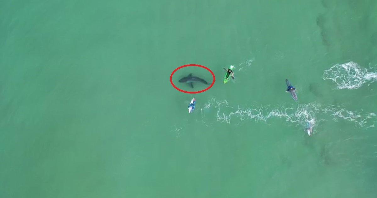 requin.jpg?resize=1200,630 - Afrique du Sud: un grand requin blanc a été filmé tout près d'un groupe de surfeur