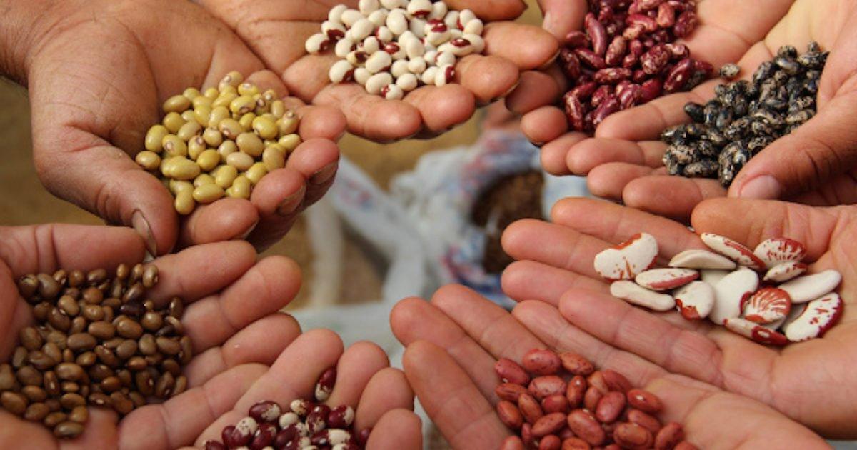semences paysannes france biodiversite 1280x720 e1593028036224.jpg?resize=412,232 - Biodiversité : Il est enfin possible d'acheter des semences paysannes