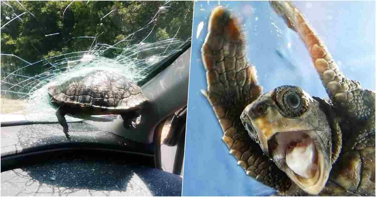 thumbnail 2.jpg?resize=412,232 - Battle of The Century: Turtle vs. Car