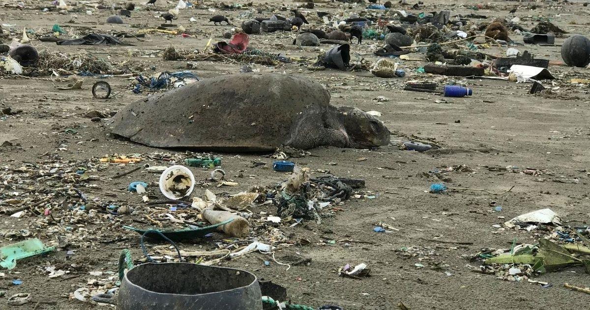 0014cfaa 1600 e1595005415767.jpg?resize=412,232 - Pollution : Au Bangladesh, des vagues de déchets plastiques tuent les tortues