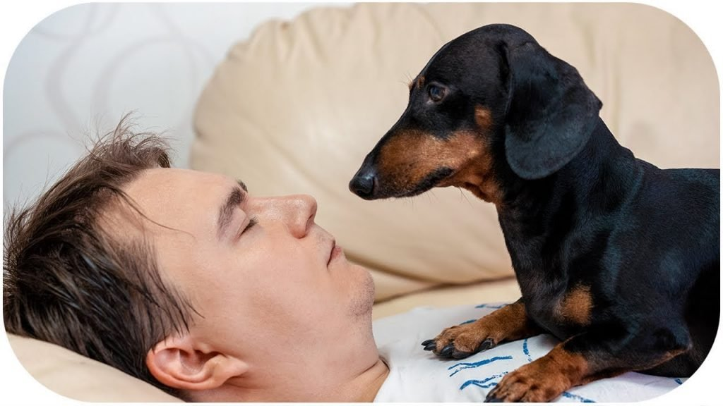 cute oldest dachshund