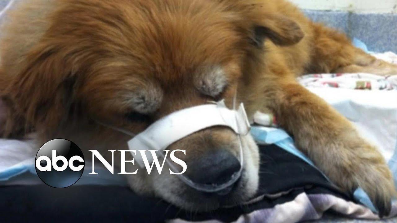 dog saves owner