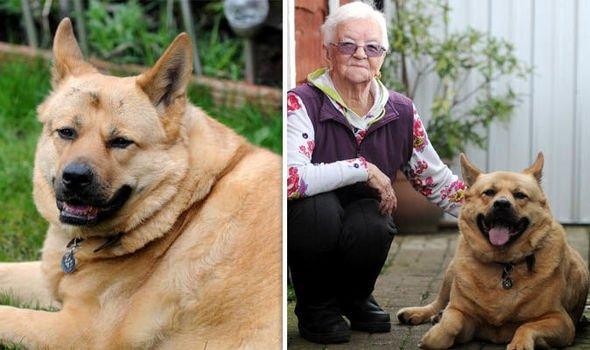 good dog saves owner