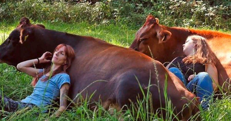 cows are cute