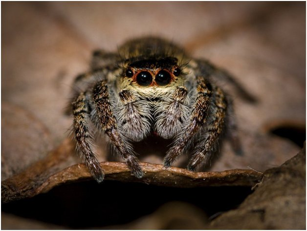 spiders are cute