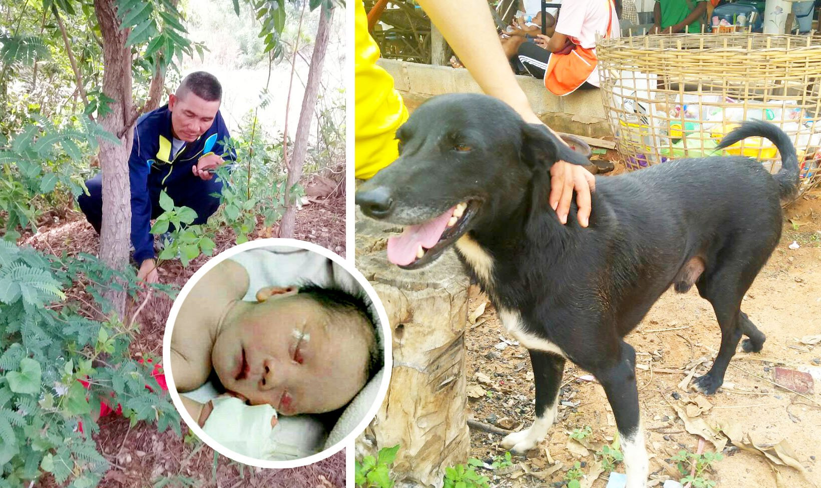dog saves newborn