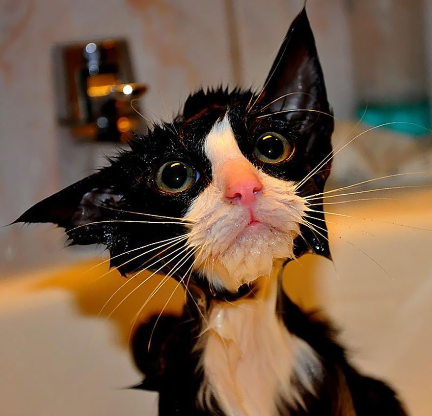 wet cats pictures