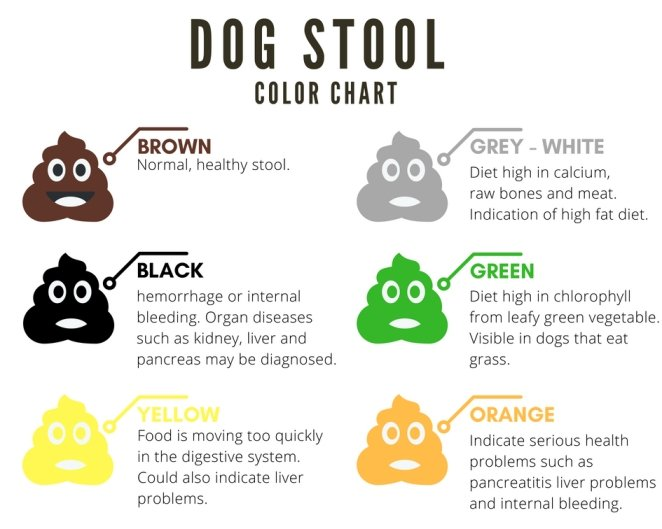 white poop in dogs