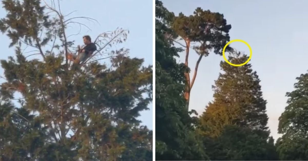 6 77.jpg?resize=1200,630 - A Man Is Spotted Having Picnic At Top Of Giant 60ft Tree