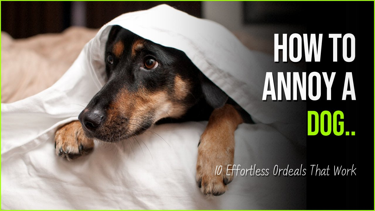 annoy a dog 1.jpg?resize=1200,630 - Annoying A Dog Has Never Been Easier Than These 10 Effortless Ordeals