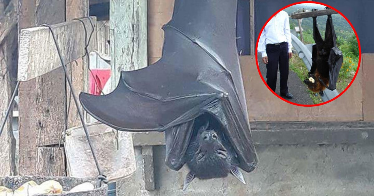 bat6.png?resize=1200,630 - People Horrified Over Nightmare-Inducing Photo Of 'Human-Sized' Bat