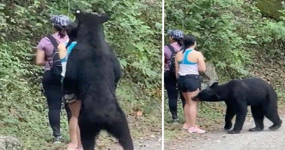 bear 1.jpg?resize=412,232 - Selfie du siècle: des randonneuses ont réussi à se prendre en photo avec... un ours !