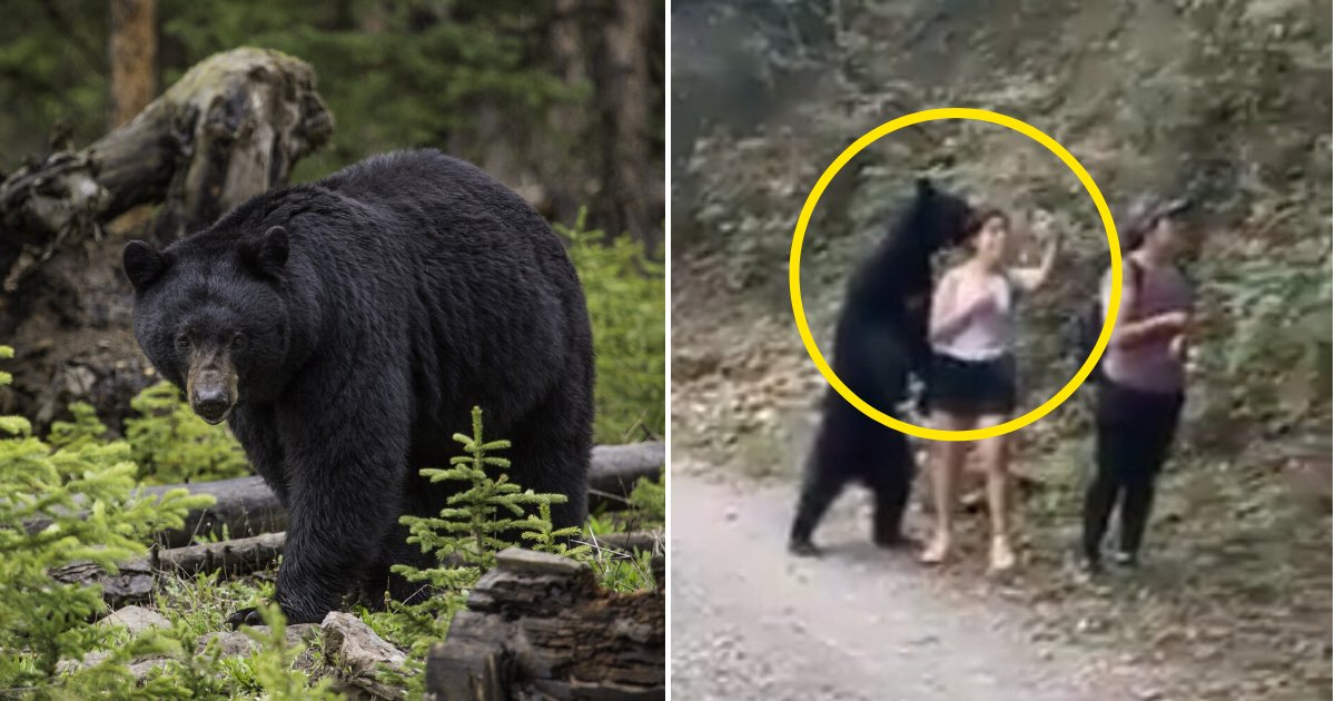 bear4.png?resize=412,232 - Bear Approaches Hikers And Poses With Them As They Take A Selfie