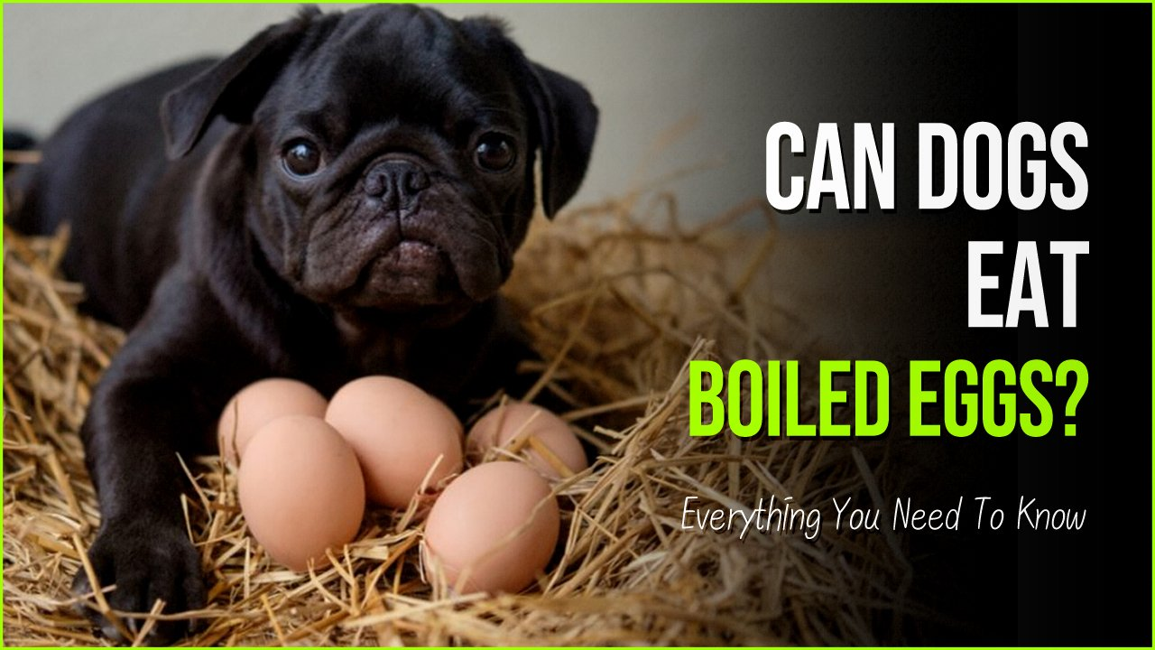 can dogs eat boiled eggs.jpg?resize=412,232 - Can Dogs Eat Hard Boiled Eggs? A Good Guide For Your Pet