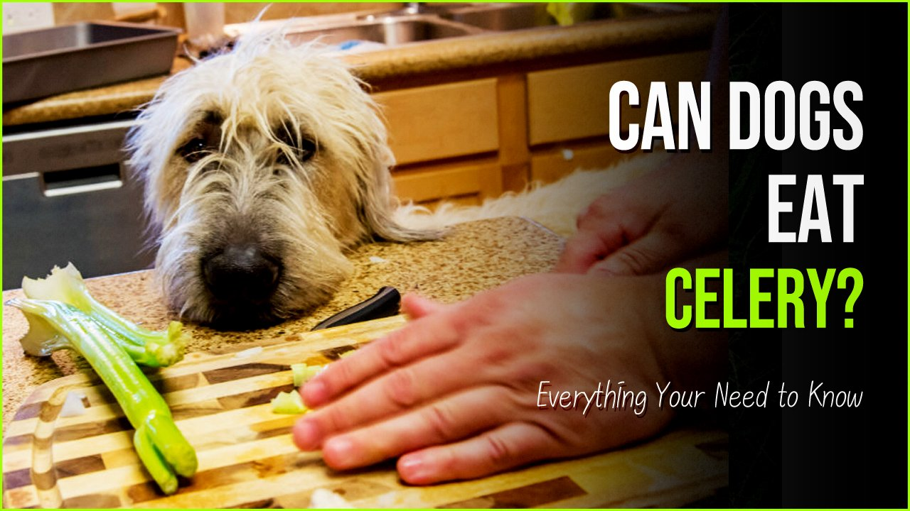 can dogs eat celery.jpg?resize=1200,630 - Can Dogs Eat Celery- The Hidden Truth About The Nutritious Treat
