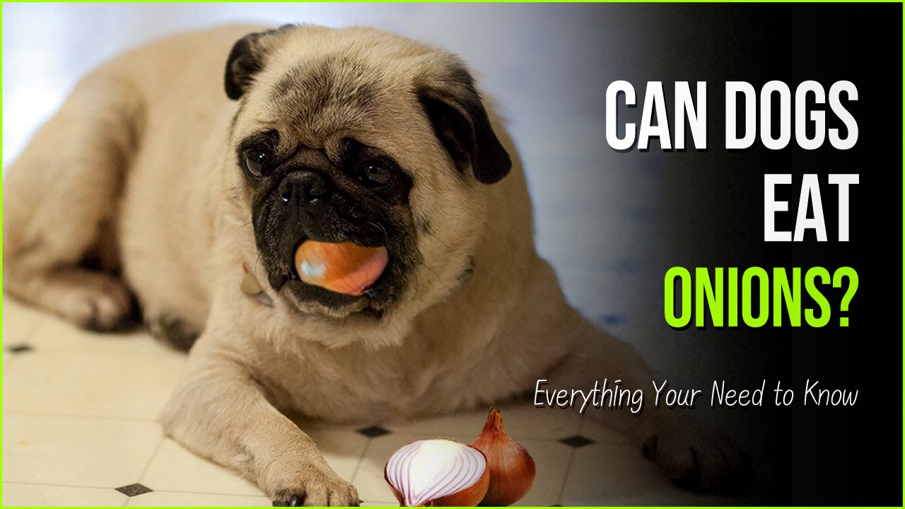 can dogs eat onions.jpg?resize=1200,630 - Can Dogs Eat Onions - Here's The Real Reason Why They Shouldn't