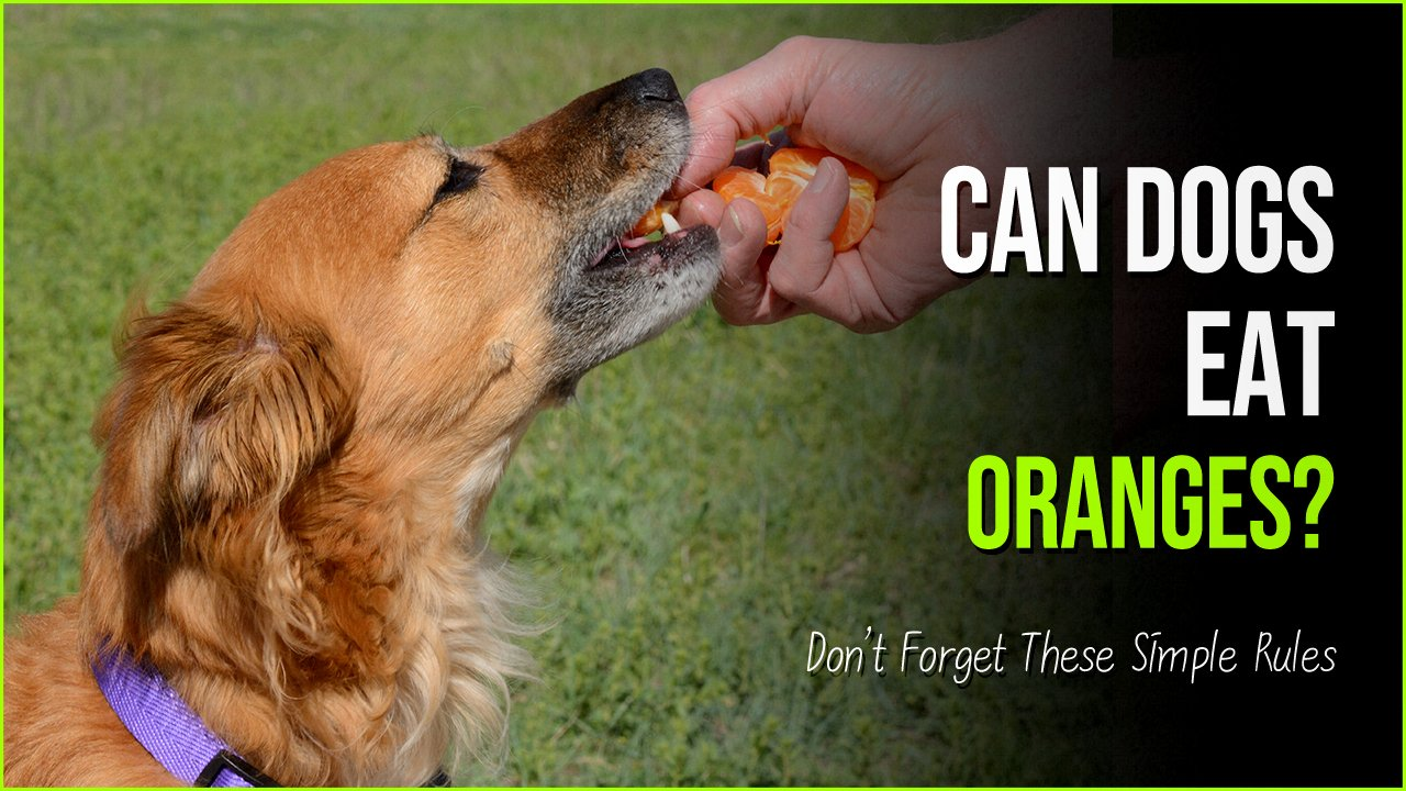 can dogs eat oranges.jpg?resize=412,232 - Can Dogs Eat Oranges? You Bet it, But Don't Forget These Simple Rules