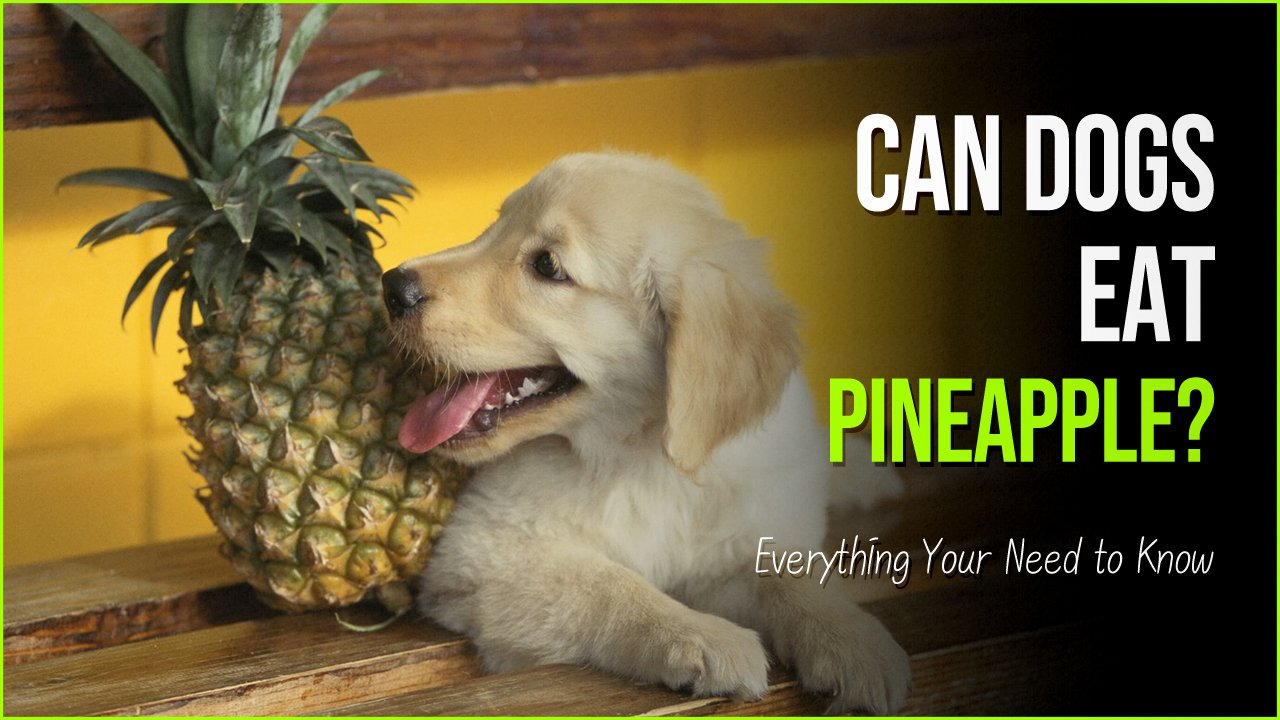 can dogs eat pineapple.jpg?resize=1200,630 - Can Dogs Have Pineapple? Yes They Can, But Follow These Guidelines