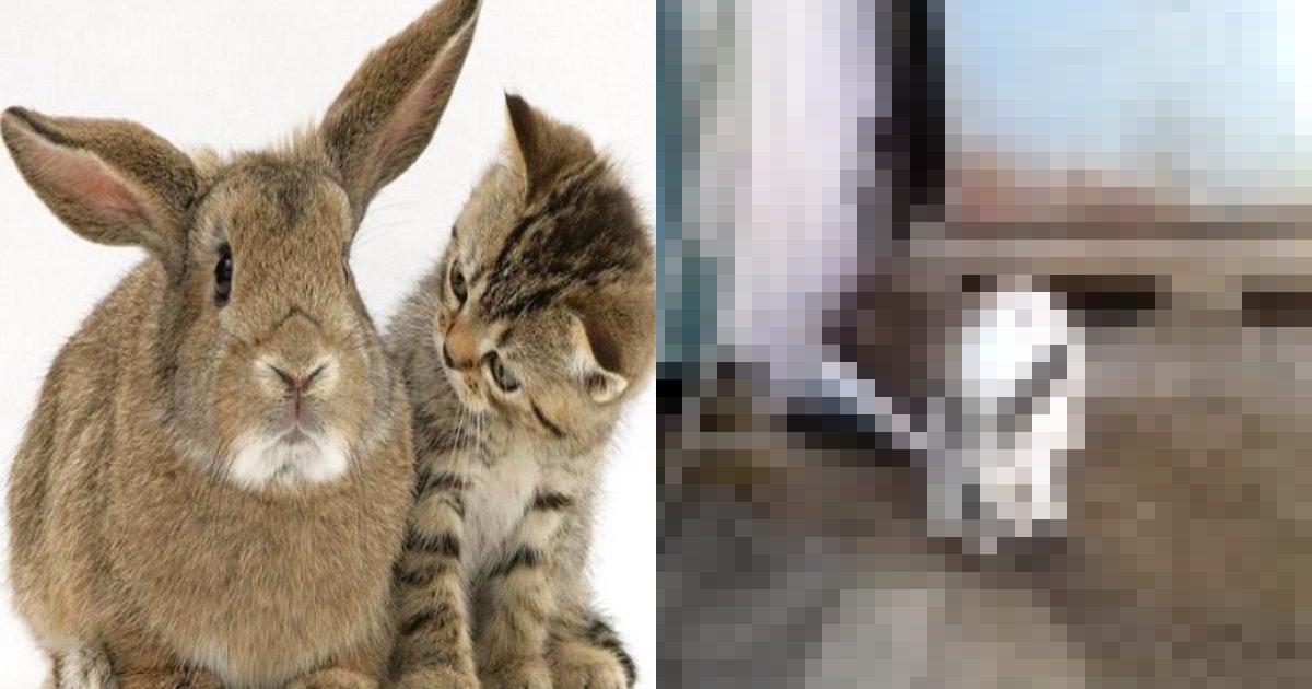 cat rabit.png?resize=412,232 - 飼い主「飼い兎の様子が変、、、」ウサギは閉じ込められていた子猫を救出!