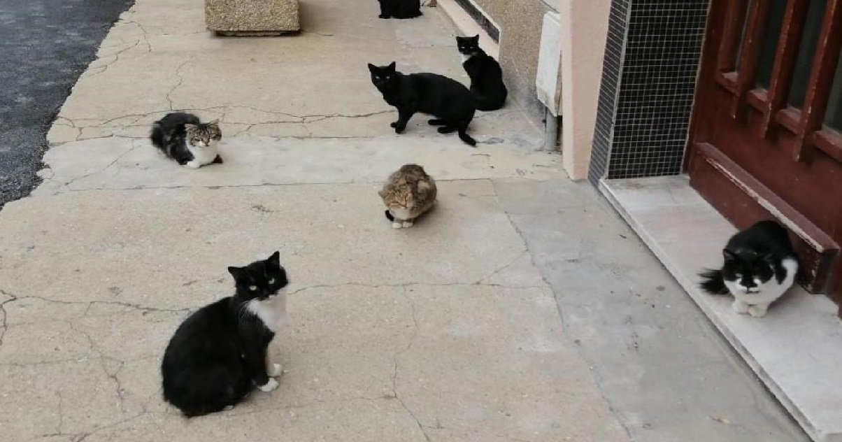 chat.jpg?resize=412,232 - Qui s'amuse à tirer sur les chats du quartier au fusil à plomb depuis le début du mois de juin ?