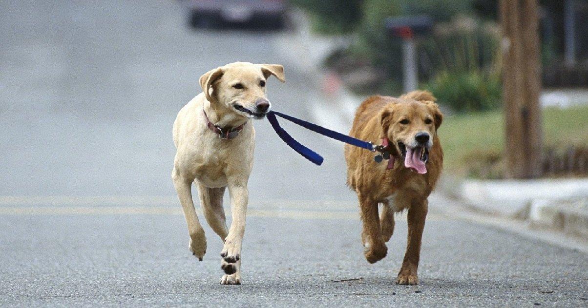 chien 2.jpg?resize=412,232 - Une femme a été retrouvée morte, étranglée par les laisses de ses chiens...