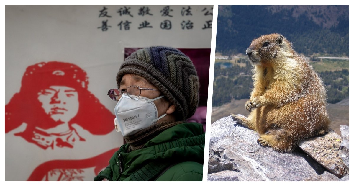 collage 16.jpg?resize=1200,630 - Local Authorities Issue High Level Warning For The Bubonic Plague in Northern China