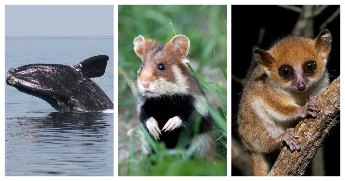 collage 27.jpg?resize=412,275 - New IUCN Report Estimates That More Than 33,000 Species Are Critically Endangered