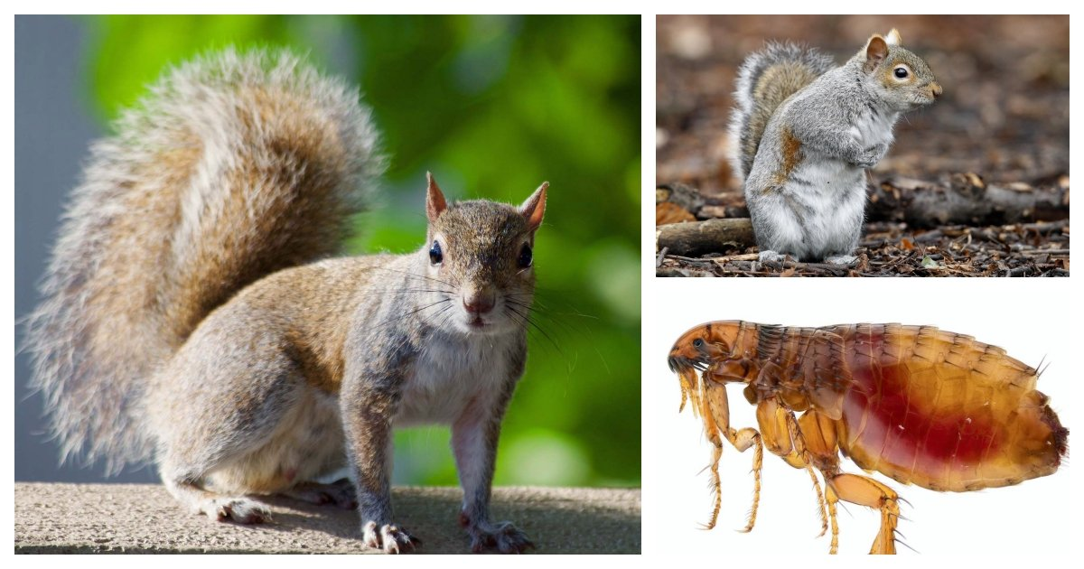 collage 37.jpg?resize=412,232 - A Squirrel Tests Positive for The Bubonic Plague Less Than 20 Miles From Denver, CO
