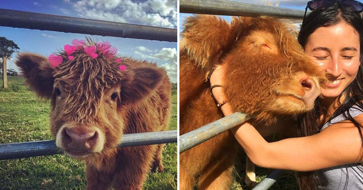cows are cute.jpg?resize=1200,630 - These 10 Fascinating Reasons Will Prove To You Why Cows Are Cute