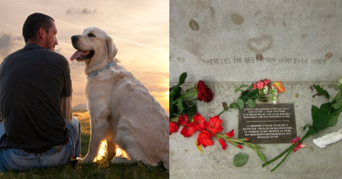 dog dai.png?resize=412,232 - 自分を救って12年間面倒を見てくれた飼い主の''死''を受け入れられず身を投げた犬