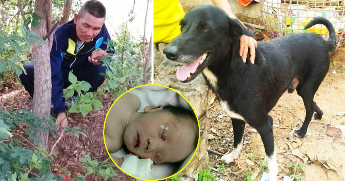 dog saves newborn.jpg?resize=1200,630 - Hero Dog Saves Newborn After Teen Mom Buries Son Alive In Thailand